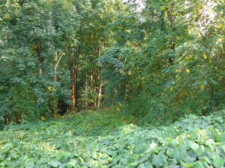 Photo 5: 22784 ROSS Road in Hope: Hope Center Land for sale : MLS®# R2230846