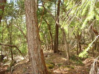 Photo 10: LT 106 Halibut Hill Rd in MUDGE ISLAND: Isl Mudge Island Land for sale (Islands)  : MLS®# 778215