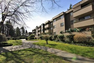 "Photo 18: 23 2444 WILSON Avenue in Port Coquitlam: Central Pt Coquitlam Condo for sale in ""ORCHARD"" : MLS®# R2247251"