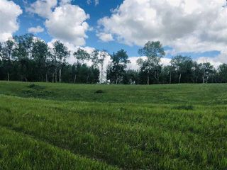 Photo 8: 14-51315 RR262 Acres: Rural Parkland County Rural Land/Vacant Lot for sale : MLS®# E4200477