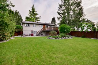 Photo 46: 20801 MCFARLANE Avenue in Maple Ridge: Southwest Maple Ridge House for sale : MLS®# R2065058