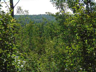 Photo 12: 48115 RGE RD 275: Rural Leduc County Rural Land/Vacant Lot for sale : MLS®# E4195927