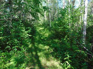 Photo 11: 48115 RGE RD 275: Rural Leduc County Rural Land/Vacant Lot for sale : MLS®# E4195927
