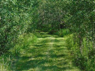 Photo 5: 48115 RGE RD 275: Rural Leduc County Rural Land/Vacant Lot for sale : MLS®# E4195927