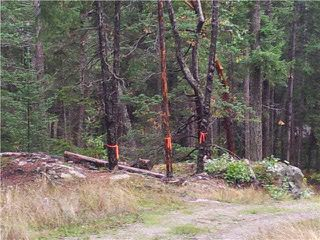 Main Photo: LOT 1 BROOKS LANE in Halfmoon Bay: Halfmn Bay Secret Cv Redroofs Home for sale (Sunshine Coast)  : MLS®# V1114627