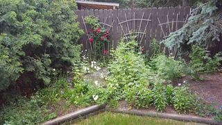 Photo 22: 11707 25 Avenue in Edmonton: Zone 16 House for sale : MLS®# E4137538
