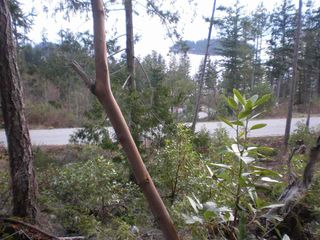 "Photo 8: LOT 105 JOHNSTON HEIGHTS Road in Pender Harbour: Pender Harbour Egmont Home for sale in ""DANIEL POINT"" (Sunshine Coast)  : MLS®# R2244687"