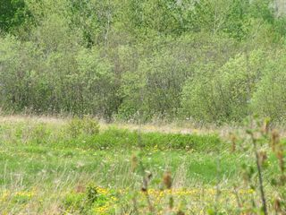 Photo 13: Lot 4 West Halls Harbour Road in Halls Harbour: 404-Kings County Vacant Land for sale (Annapolis Valley)  : MLS®# 201911040