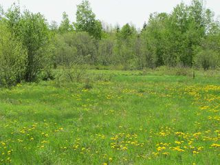 Photo 10: Lot 4 West Halls Harbour Road in Halls Harbour: 404-Kings County Vacant Land for sale (Annapolis Valley)  : MLS®# 201911040