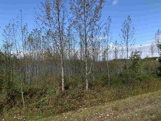 Photo 12: 53128 RGE RD 34: Rural Parkland County Rural Land/Vacant Lot for sale : MLS®# E4174450