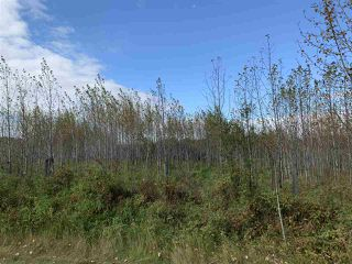 Photo 13: 53128 RGE RD 34: Rural Parkland County Rural Land/Vacant Lot for sale : MLS®# E4174450