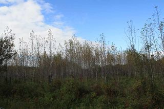 Photo 18: 53128 RGE RD 34: Rural Parkland County Rural Land/Vacant Lot for sale : MLS®# E4174450
