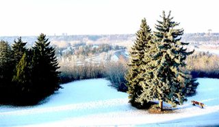 Photo 26: 11823 SASKATCHEWAN Drive in Edmonton: Zone 15 House for sale : MLS®# E4160348