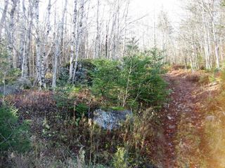 Photo 6: LOT HIGHWAY 107 in West Petpeswick: 35-Halifax County East Vacant Land for sale (Halifax-Dartmouth)  : MLS®# 3348670