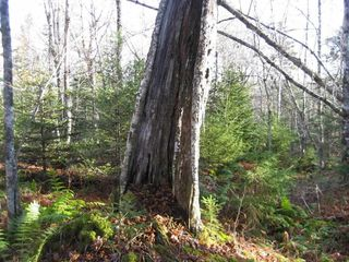 Photo 10: LOT HIGHWAY 107 in West Petpeswick: 35-Halifax County East Vacant Land for sale (Halifax-Dartmouth)  : MLS®# 3348670