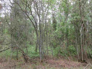 Photo 8: RR 214 Twp Rd 624: Rural Thorhild County Rural Land/Vacant Lot for sale : MLS®# E4150908