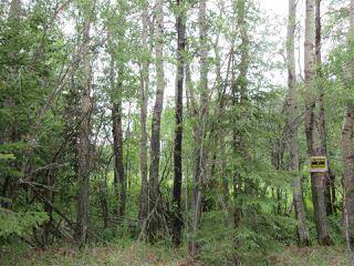 Photo 7: RR 214 Twp Rd 624: Rural Thorhild County Rural Land/Vacant Lot for sale : MLS®# E4150908
