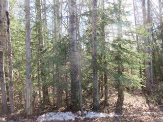 Photo 22: RR 214 Twp Rd 624: Rural Thorhild County Rural Land/Vacant Lot for sale : MLS®# E4150908