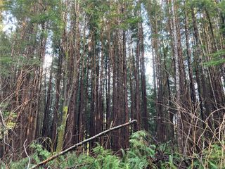 Photo 13: E-420 Quatsino Rd in : NI Port Hardy Land for sale (North Island)  : MLS®# 862758