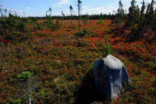 Photo 6: 2115 West Sable Road in Louis Head: 407-Shelburne County Vacant Land for sale (South Shore)  : MLS®# 201908473