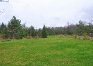 Photo 9: 3420 Cedar Springs Road in Burlington: Rural Burlington House (Bungalow-Raised) for sale : MLS®# W3072593