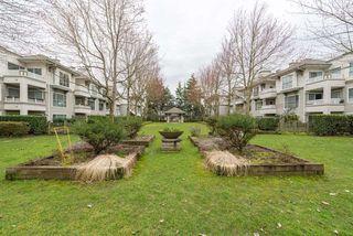 "Photo 13: 116 8880 JONES Road in Richmond: Brighouse South Condo for sale in ""Redonda"" : MLS®# R2147055"