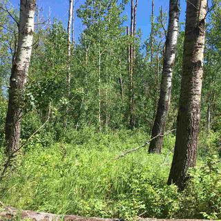 Photo 17: Lot 6 645048 Rge Rd 200: Rural Athabasca County Rural Land/Vacant Lot for sale : MLS®# E4069751