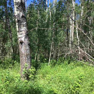 Photo 16: Lot 6 645048 Rge Rd 200: Rural Athabasca County Rural Land/Vacant Lot for sale : MLS®# E4069751