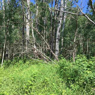 Photo 15: Lot 6 645048 Rge Rd 200: Rural Athabasca County Rural Land/Vacant Lot for sale : MLS®# E4069751