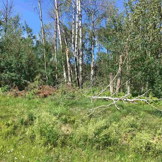 Photo 18: Lot 6 645048 Rge Rd 200: Rural Athabasca County Rural Land/Vacant Lot for sale : MLS®# E4069751