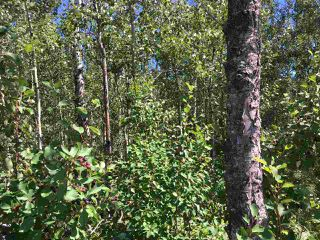 Photo 8: Lot 6 645048 Rge Rd 200: Rural Athabasca County Rural Land/Vacant Lot for sale : MLS®# E4069751