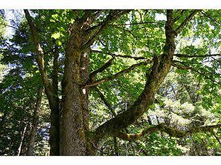 """Photo 4: 11211 BROOKS Road in Mission: Dewdney Deroche Land for sale in """"EAST OF DEROCHE"""" : MLS®# F1447021"""