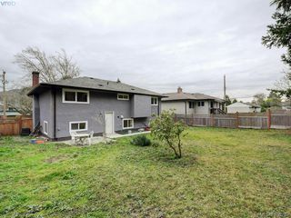 Photo 17: 3590 Shelbourne St in VICTORIA: SE Cedar Hill House for sale (Saanich East)  : MLS®# 805260