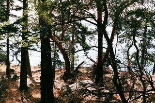 Photo 3: 17 TRUEWORTHY Road: Saturna Island Land for sale (Islands-Van. & Gulf)  : MLS®# R2013432