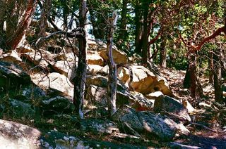 Photo 4: 17 TRUEWORTHY Road: Saturna Island Land for sale (Islands-Van. & Gulf)  : MLS®# R2013432