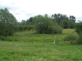 Photo 3: 25928 16th Avenue in Aldergrove: Home for sale : MLS®# F2806668