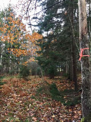 Photo 6: Lot Sweetland Road in Farmville: 405-Lunenburg County Vacant Land for sale (South Shore)  : MLS®# 202022943
