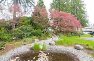 Photo 18: 101 3750 EDGEMONT BOULEVARD in North Vancouver: Edgemont Condo for sale : MLS®# R2160929