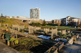 """Photo 14: 313 83 STAR Crescent in New Westminster: Queensborough Condo for sale in """"Residences by the River"""" : MLS®# R2379865"""