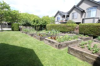 Photo 17: 14 4740 221 STREET in Langley: Murrayville Townhouse for sale : MLS®# R2273734
