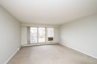 Photo 8: 307-12096 222nd in Maple Ridge: West Central Condo for sale : MLS®# R2065694