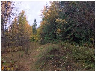 Photo 9: 1546 Blind Bay Road in Blind Bay: Vacant Land for sale : MLS®# 10125568