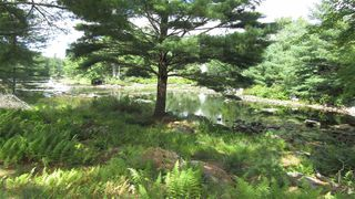 Photo 4: 7782 McGills Island Road in Middle Ohio: 407-Shelburne County Vacant Land for sale (South Shore)  : MLS®# 202016488