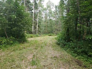 Photo 4: 51109 RGE RD 261 Road: Rural Parkland County Rural Land/Vacant Lot for sale : MLS®# E4210417