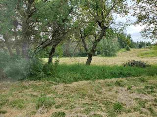 Photo 19: 51109 RGE RD 261 Road: Rural Parkland County Rural Land/Vacant Lot for sale : MLS®# E4210417