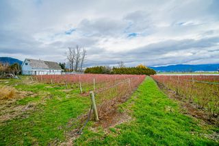 Photo 37: 35826 SOUTH PARALLEL Road in Abbotsford: Sumas Prairie House for sale : MLS®# R2520155