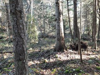 Photo 6: Lot 91 SOCKEYE Dr in : Isl Mudge Island Land for sale (Islands)  : MLS®# 861195