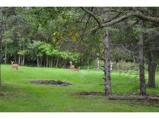 Photo 19: 591 Fairmont Road in WINNIPEG: Charleswood Residential for sale (South Winnipeg)  : MLS®# 1316410