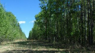 Photo 4: RR263 Twp Rd 625: Rural Westlock County Rural Land/Vacant Lot for sale : MLS®# E4169270