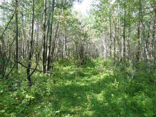 Photo 8: RR263 Twp Rd 625: Rural Westlock County Rural Land/Vacant Lot for sale : MLS®# E4169270
